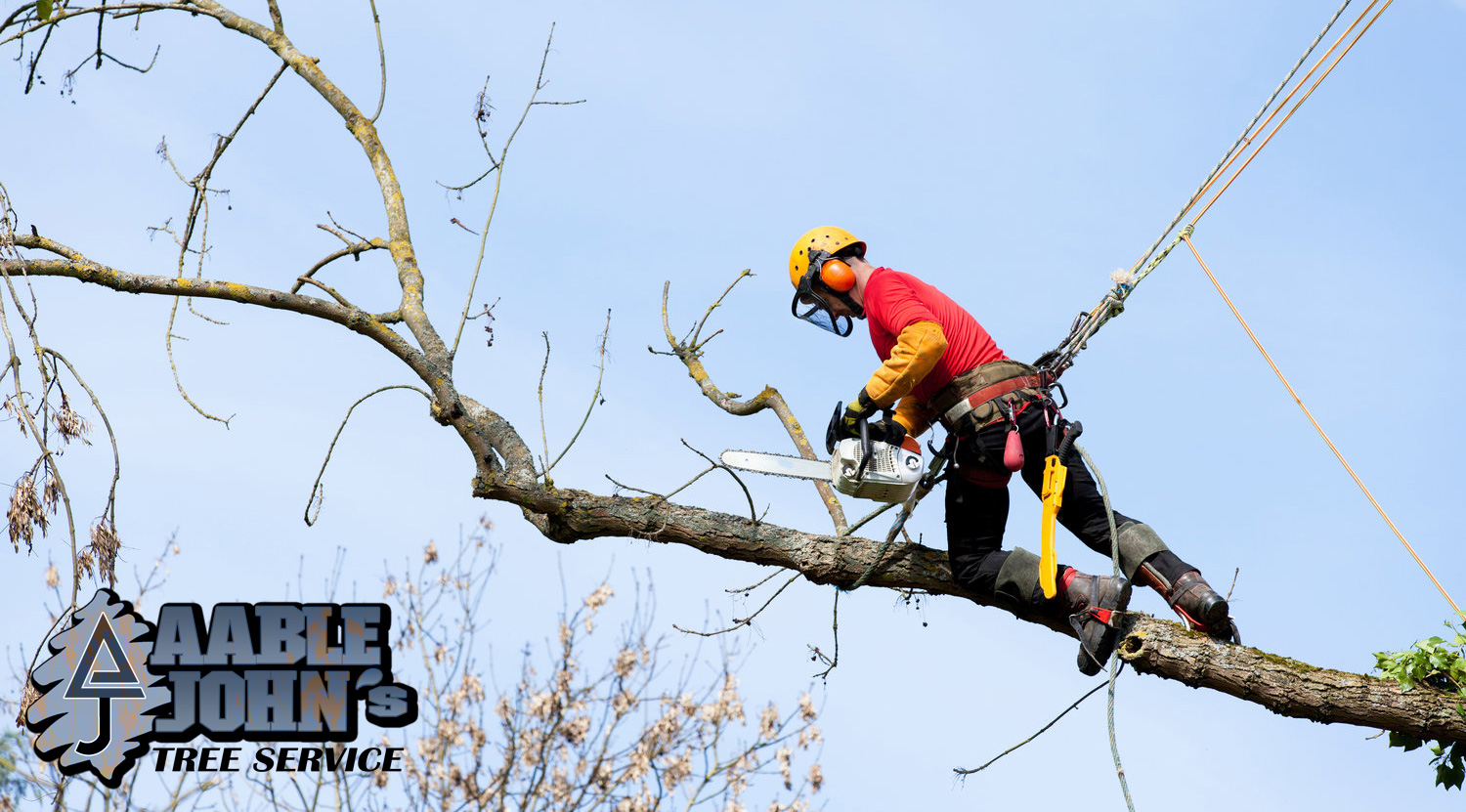 Tree Removal Services In Powder Springs